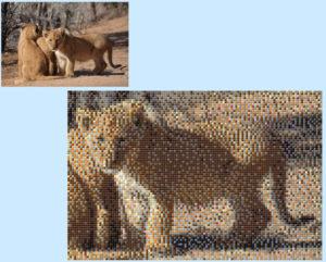 Lions - Silvia Garuti - 6 x 4 Baseplates
