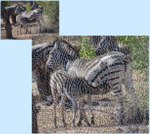Zebras - Silvia Garuti - 6 x 5 Baseplates