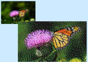 Farfalla - Foto di Sean Stratton - 5 x 4 Basi